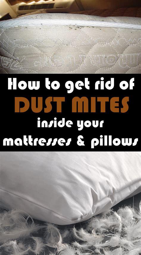 rid  dust mites   mattresses