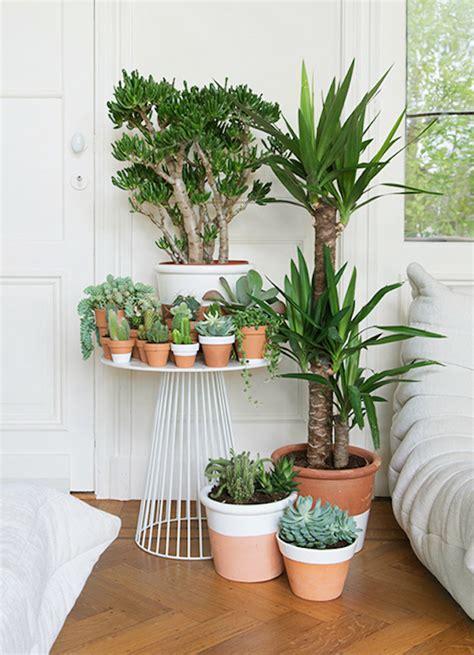 plante dans une chambre des plantes dans la chambre une bonne idée enfant