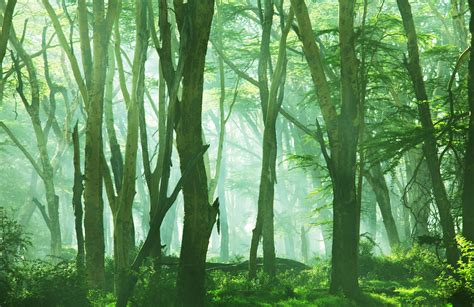 Misty Forest Scene Wallpaper Mural  Muralswallpaper. Dimpling Signs. Diabetic Shock Signs. Credit Union Logo. Wellness Signs. Word Pink Lettering. Custom Windshield Decals. Addiction Recovery Signs. Old World Murals