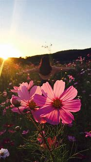 Wild Flower HD Wallpaper For Your Mobile Phone
