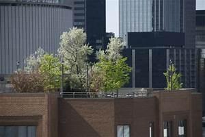 Sichtschutz Zum Bepflanzen : 1001 ideen f r terrassenbepflanzung zum inspirieren ~ Sanjose-hotels-ca.com Haus und Dekorationen