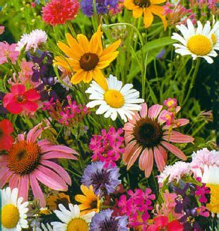 perennial cutting flowers garden
