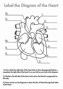 Four Human Biology Diagrams to Label - Heart, Lungs ...