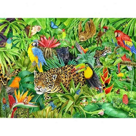 Rainforest Clipart Best Rainforest Clipart 14810 Clipartion