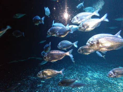 les nocturnes de l aquarium de sortie insolite
