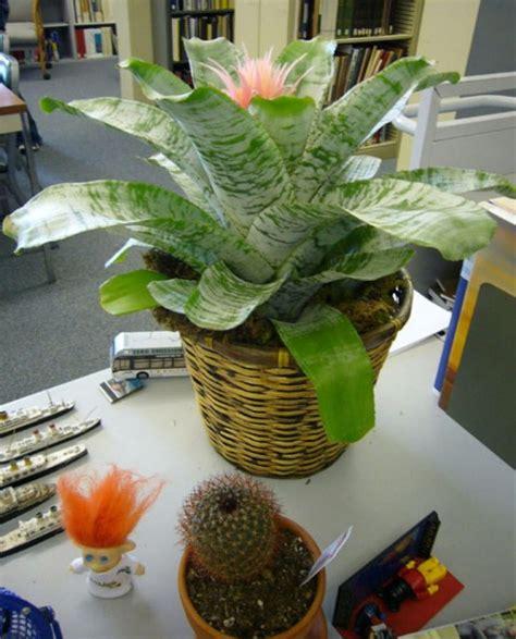 plante pour le bureau quelle plante pour quelle pièce