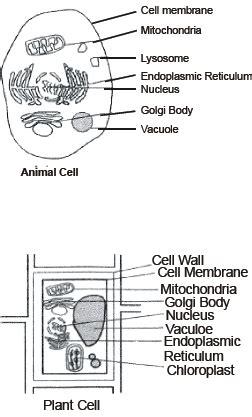 cbse  biology cbse  fundamental unit  life notes