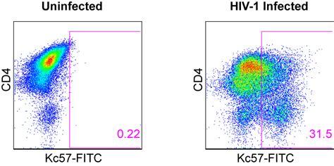 HIV Gag p24 flow cytometry antibody - Kc57-FITC ...