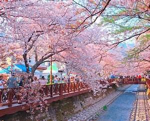 Korea's Best Cherry Blossom Festivals 2018