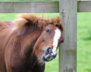 hauterkrankungen beim pferd durch fliegen muecken