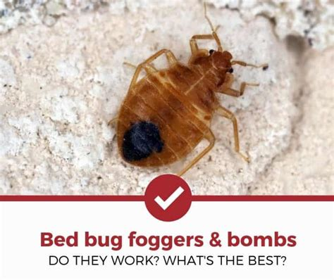 Fogger For Bed Bugs by Top 2 Best Bed Bug Bomb Foggers 2019 Review Pest
