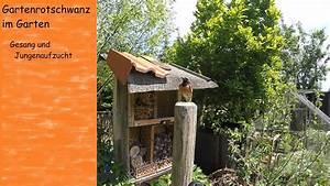 Tiere Im Insektenhotel : gartenrotschwanz gesang und jungenaufzucht tiere im garten youtube ~ Whattoseeinmadrid.com Haus und Dekorationen