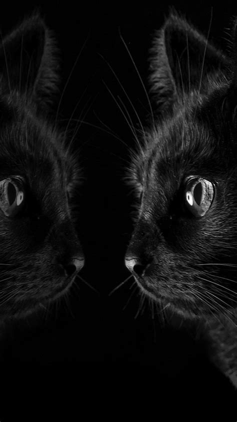 Phone Wallpaper Black Cat by Black Cat Look At Mirror Black Background 640x1136 Iphone