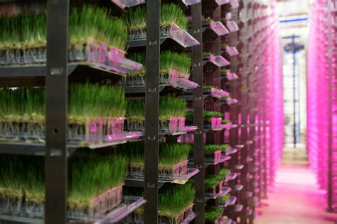 produce vertical farm grows 16 acres of food in just