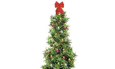 walmart has been selling marijuana christmas trees 183 high