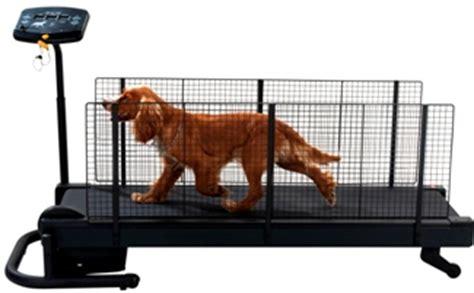 fitness etap chien toiletteur 224 t 233 l 04