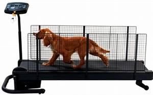 fitness dog nice etap chien toiletteur a nice tel 04 With tapis de course pour chien
