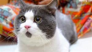 See the Cat That Looks Perpetually Surprised Video - ABC News