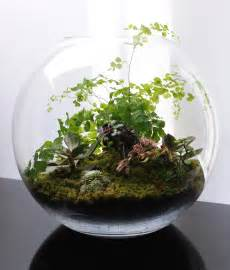 terrarium design terrariums fish bowl gardening what 39 s on jimmy b 39 s mind