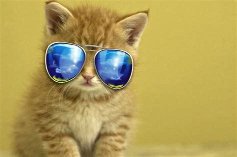 Cute Animal Wallpapers, Puffy, Hd Wild Life Photos, Pet