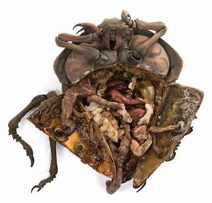 """Dissection bug"" from Starship Troopers."
