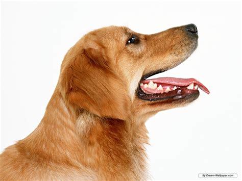 can dogs see in color can dogs see in color the paper cut
