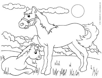 animals  baby animals coloring pages  print