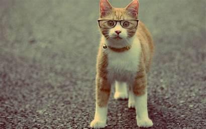 Funny Cat Desktop 1080 Pc Background 1920