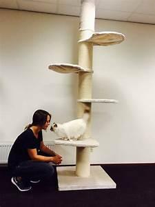 Arbre A Chat Solide : arbre a chat solide maine coon ~ Mglfilm.com Idées de Décoration