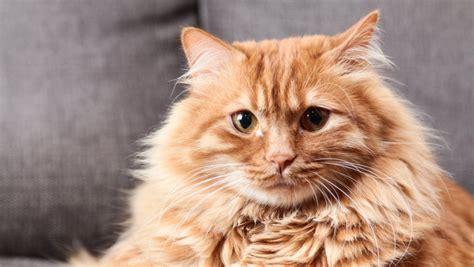 los gatos reconocen su nombre pero prefieren ignorarnos