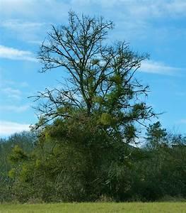 Not All Green Is Good – La Tourbeille Vineyard