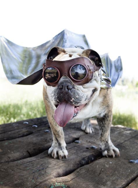 Funny Dog Superhero