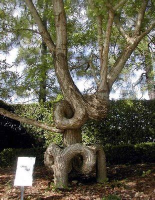 look at this strange weird odd and unique trees