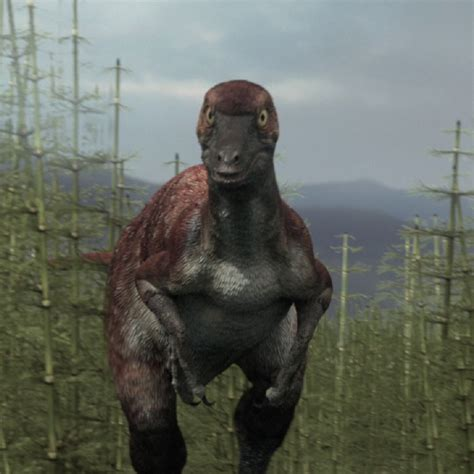 bradycneme pictures facts dinosaur