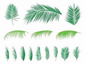 Palm Leaves Silhouettes Set Vector Art & Graphics ...