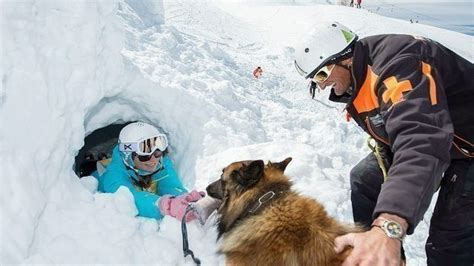 jobs working dogs    humans healthy paws