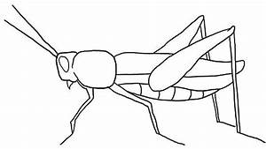 Draw a Grasshopper | To draw, How to draw and Draw
