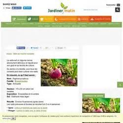 Culture Des Radis : radis l gumes pearltrees ~ Melissatoandfro.com Idées de Décoration
