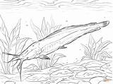 Coloring Catfish Walking Silure Coloriage Jeziora Dnie Sum Drawing Dessin Druku Printable Imprimer Drukowania Kolorowanka Ryby Drukowanka Ohbq Grodzka Marta sketch template