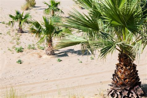 palm trees  sand  stock photo public domain pictures