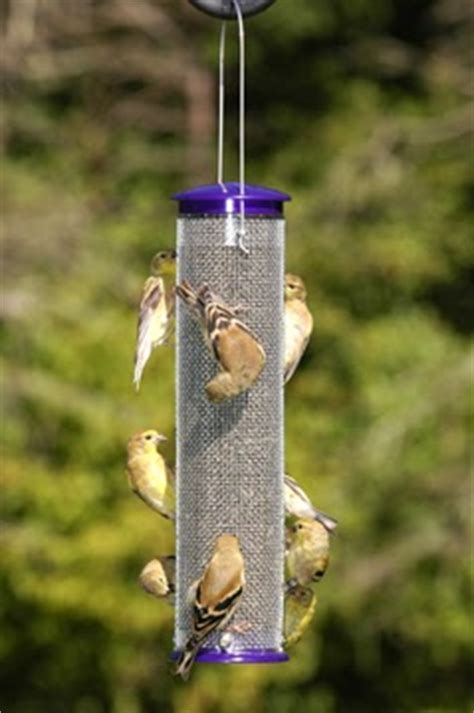 wild birds unlimited where do you place finch feeders