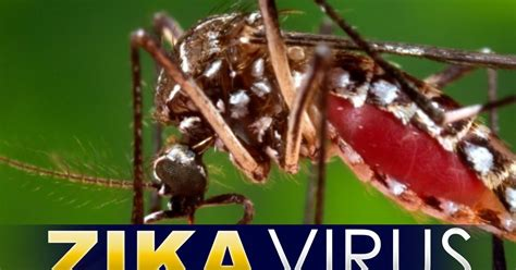 Mencegah Hamil Alami Ketahui Cara Mudah Mencegah Zika Let 39 S Stay Healthy