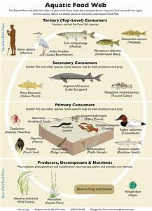 What is aquatic ecosystem   Functions & Importance to Man