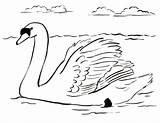 Swan Coloring Pages Drawing Colouring Printable Drawings Swans Dot Sheet Animals Samanthasbell Domestic Reference sketch template