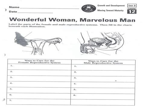 Female Reproductive System Worksheet  Free Printable Worksheets