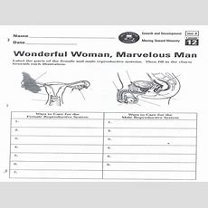 Female Reproductive System Worksheet  Free Printable Worksheets