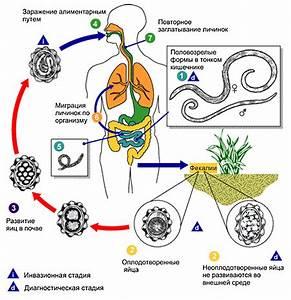 Алмаг для лечения аденомы простаты