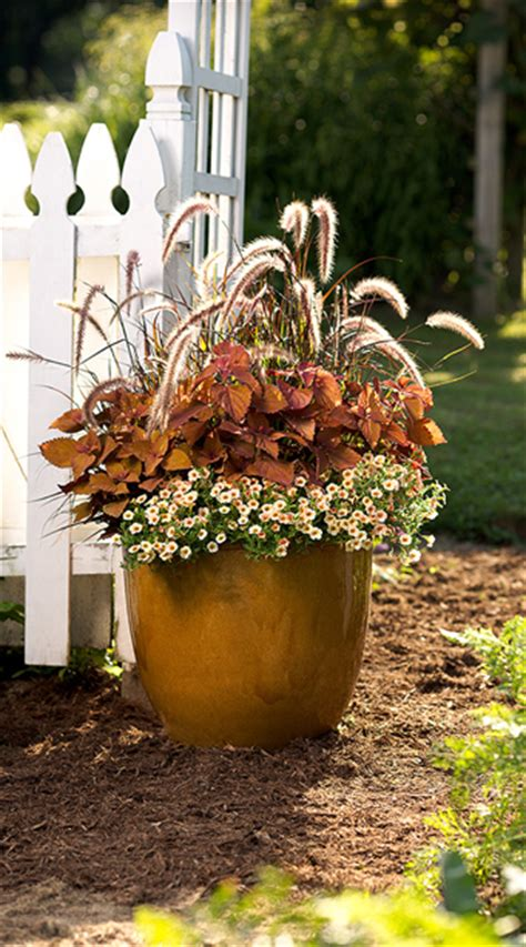 fall flower pot ideas container garden design foliage and texture proven winners