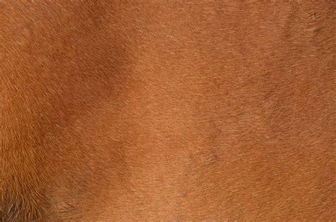Images Gratuites : bois, cuir, texture, animal, fourrure