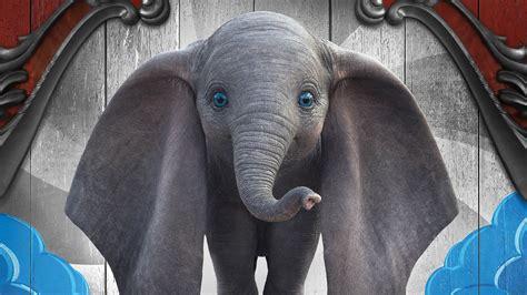 dumbo elephant    wallpapers hd wallpapers id